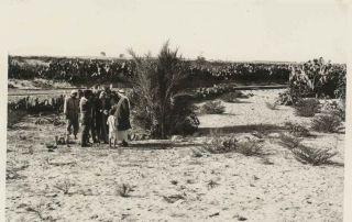 בדואים סביב קבר אבשלום ליד רפיח